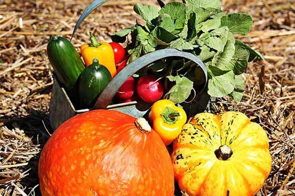 allopaniers-livraisons-fuits-et-legumes-produits-7