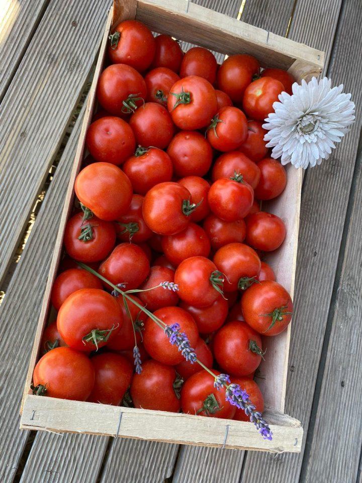 Caisse de Tomates Rondes