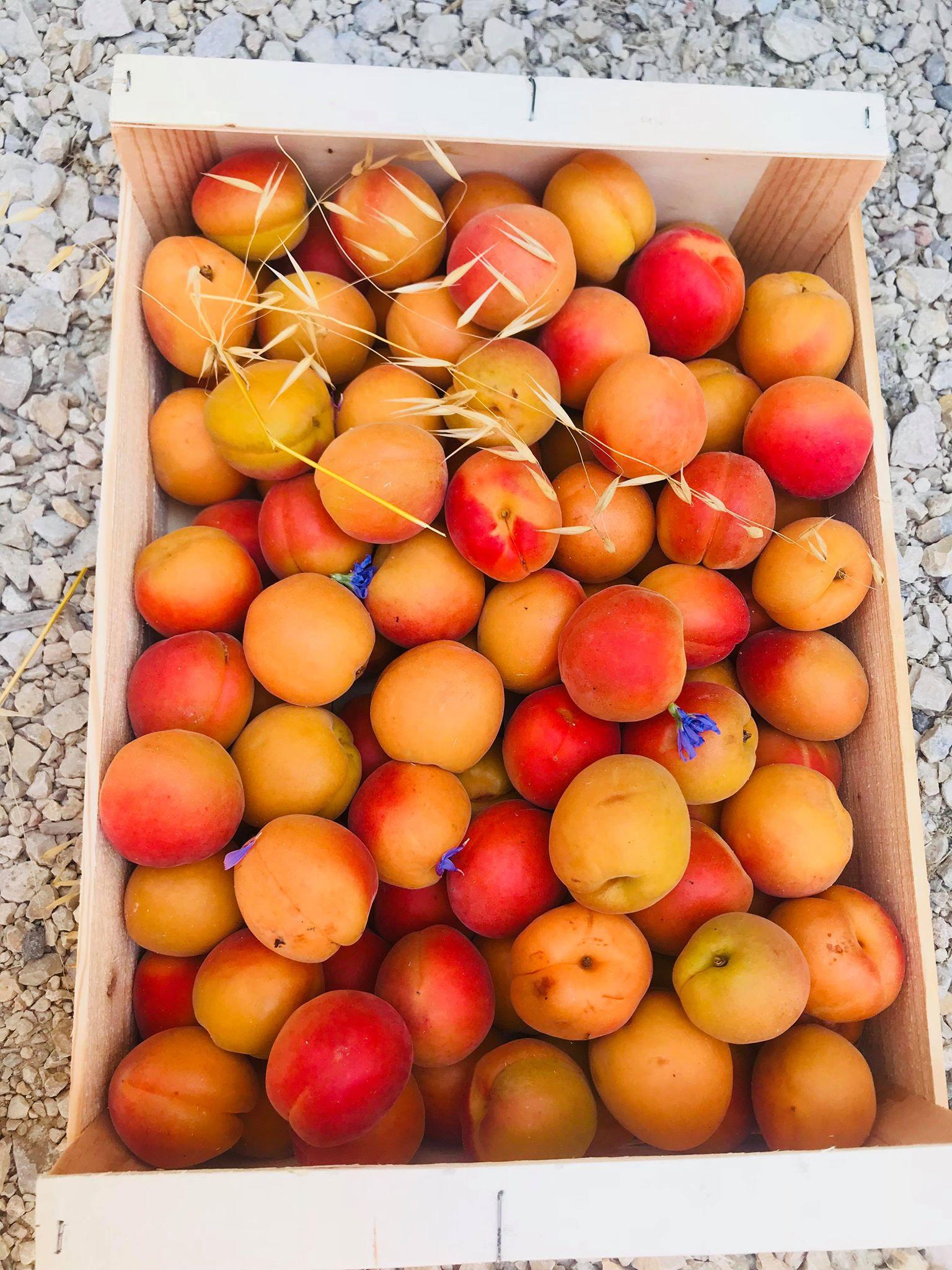 Caisse d'Abricots