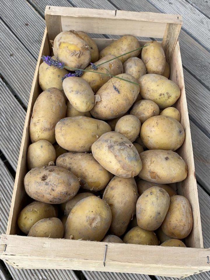 Caisse de pommes de terre nouvelles